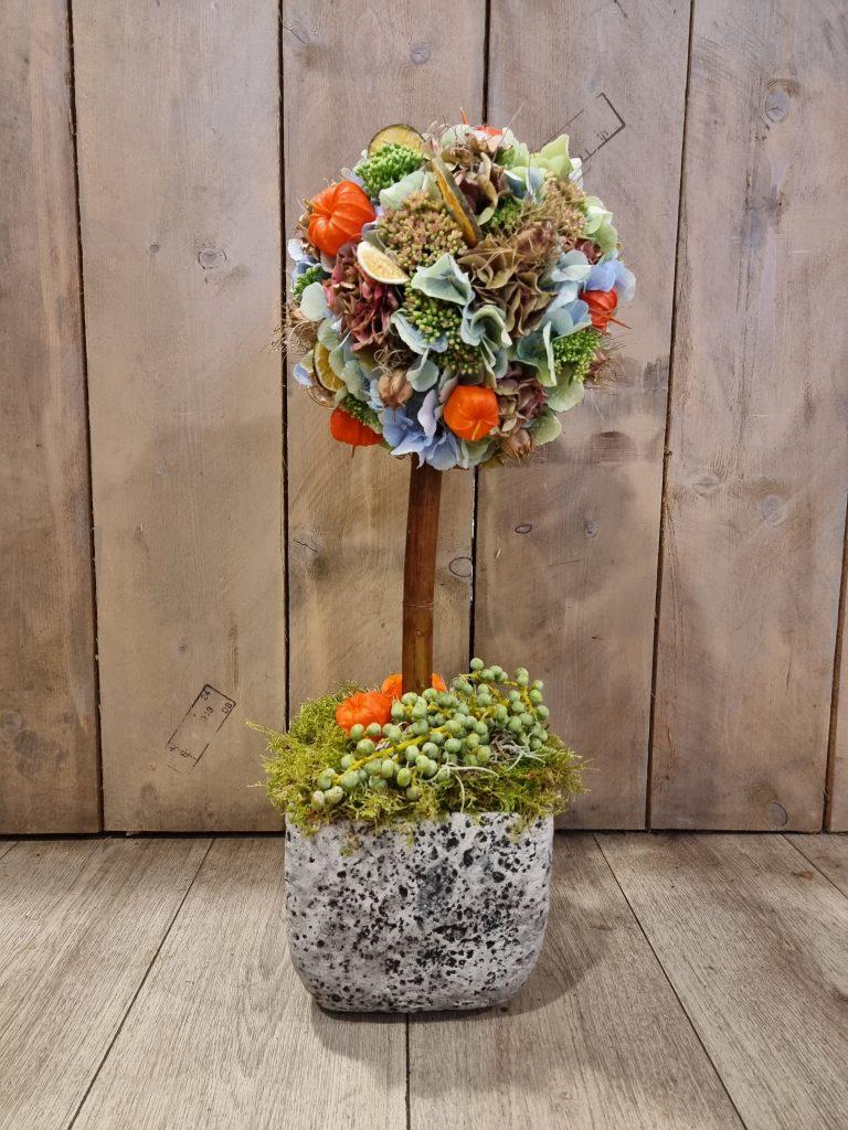 Hortensiaboom